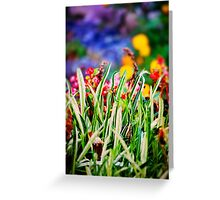 Colorful Grass Greeting Card