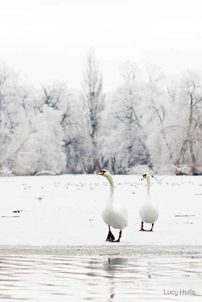 Frosty Swans by Lucy Hollis