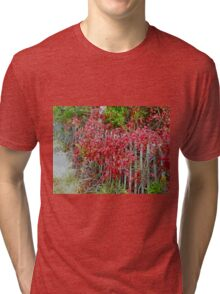 Virginia Creeper on Dune Fence - Fall Colors Tri-blend T-Shirt