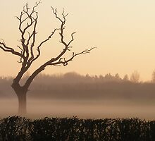 Lone Tree at Sunset in the Mist by AnnDixon