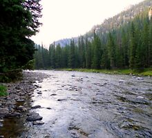 Gallatin River, Montana USA by kkphoto1