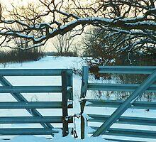 Do Not Enter by Diane Trummer Sullivan