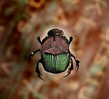 Scarab by Mark Weaver