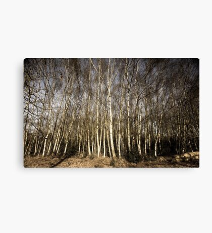 Sherwood Trees Canvas Print