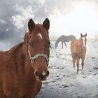 Equine Mist by Bryant Bush