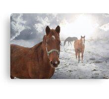 Equine Mist Canvas Print