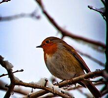Robin by Simon Marsden