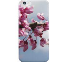 Springtime Cherry Blossoms iPhone Case/Skin