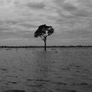 Solitude by Oli Johnson