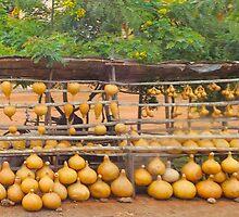 Pumpkin market near Mombasa, Kenya by Atanas Bozhikov Nasko