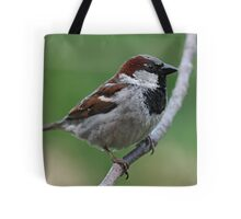 House sparrow Tote Bag