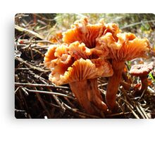 Wax Cap Bouquet Canvas Print