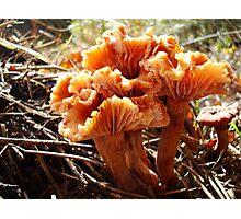Wax Cap Bouquet Photographic Print