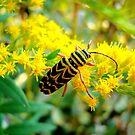 Painted Beetle by Sharon Woerner