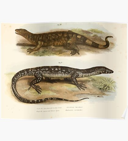 Joseph Fitzinger 1867 0053 Picture Atlas for popular scientific natural history of vertebrates Poster