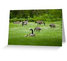 Geese on the Green Greeting Card