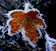 Winter Leaf. by Livvy Young