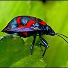 beetle by Helenvandy