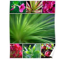 Flora Collage featuring Grass Tree Poster