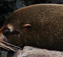 Adorable Galapagos Fur Seal by cute-wildlife