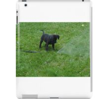 black lab puppy iPad Case/Skin
