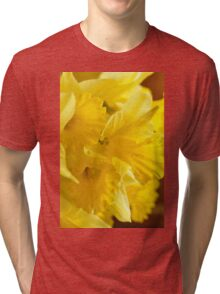 Daffodils, As Is Tri-blend T-Shirt