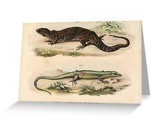 Joseph Fitzinger 1867 0081 Picture Atlas for popular scientific natural history of vertebrates Greeting Card