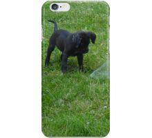 black lab puppy iPhone Case/Skin
