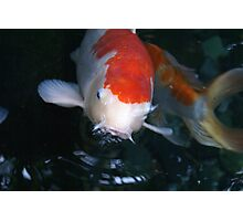 The Koi is Hungry Photographic Print