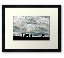 Cows on the field Framed Print