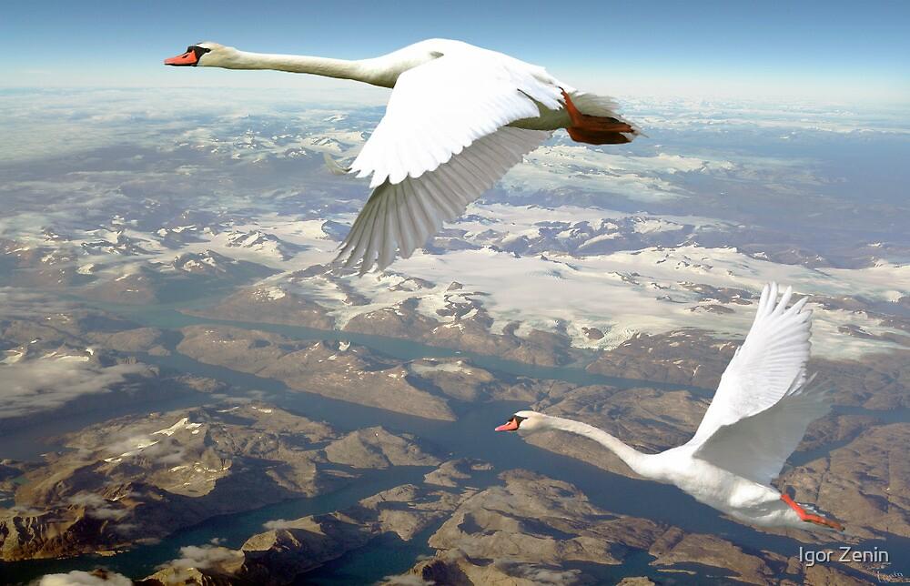 Flying Home by Igor Zenin