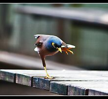 New Balance by Venkatesh Babu