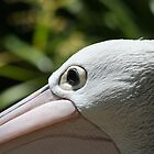 Eye of the Pelican by v-something