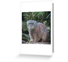 Funky Pallas Cat Greeting Card