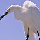Snowy Egret, As Is.............Elvis? by Kim McClain Gregal