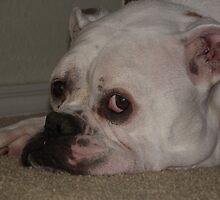 Stop Bothering Me-Athena My American Bulldog by Jennifer  Vaughn