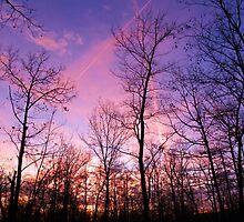 Tinges Of Blue Crimson by NatureGreeting Cards ©ccwri