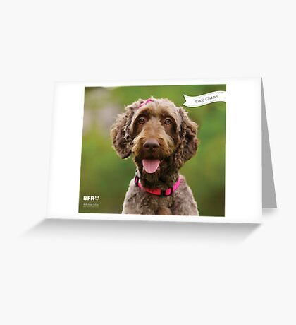 Coco Chanel :: by Wet Nose Fotos Greeting Card