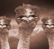 """Emu Eyes"" - emus smiling by John Hartung"
