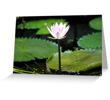 A Flower From the Water Greeting Card
