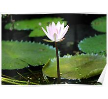 A Flower From the Water Poster
