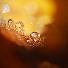 Amber Dew  by BobbiFox