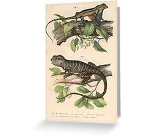Joseph Fitzinger 1867 0027 Picture Atlas for popular scientific natural history of vertebrates Greeting Card