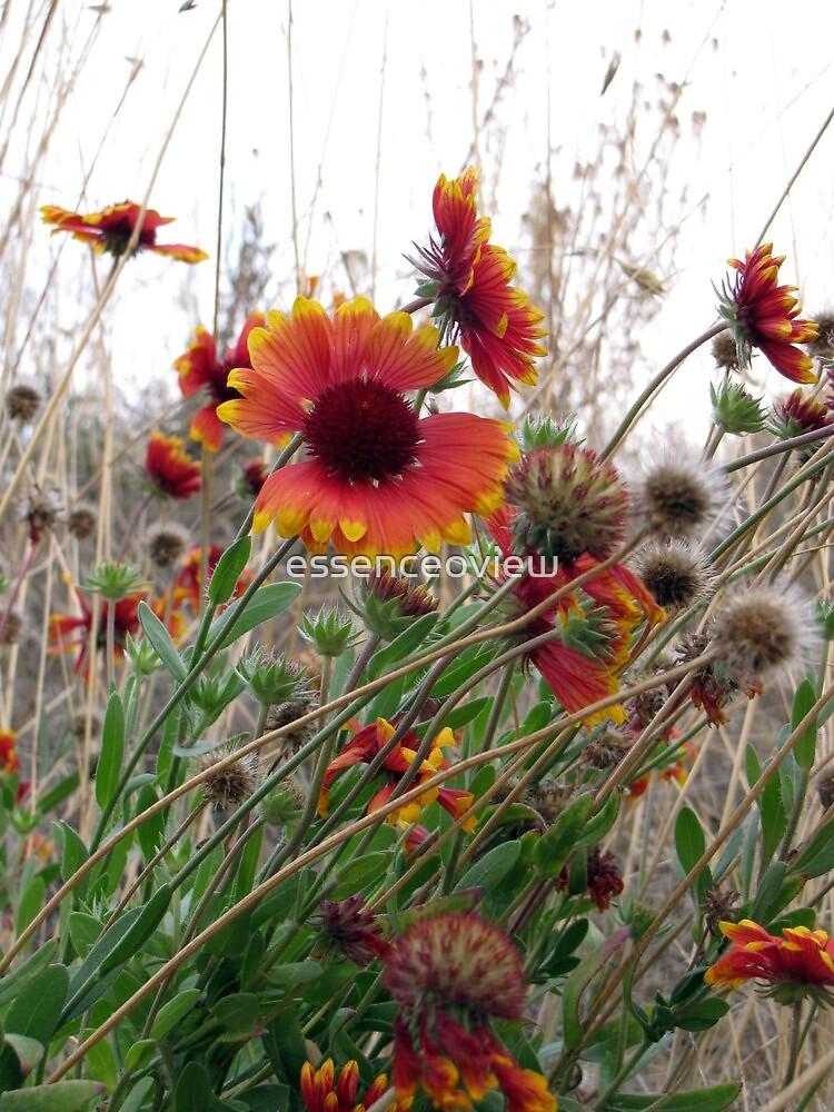 Wild Flowers by essenceoview