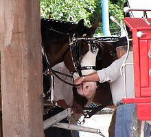 Clydesdale by essenceoview