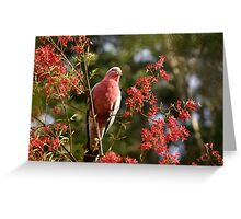 the parrot in the xmas bush Greeting Card