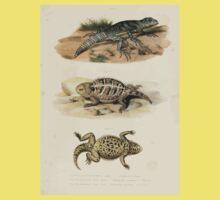 Joseph Fitzinger 1867 0043 Picture Atlas for popular scientific natural history of vertebrates Baby Tee