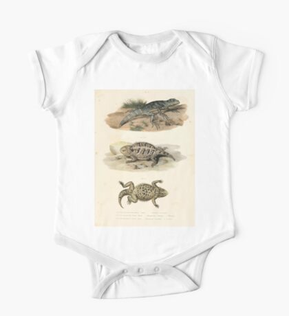 Joseph Fitzinger 1867 0043 Picture Atlas for popular scientific natural history of vertebrates One Piece - Short Sleeve