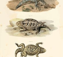 Joseph Fitzinger 1867 0043 Picture Atlas for popular scientific natural history of vertebrates by wetdryvac