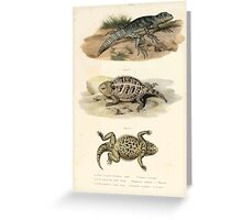 Joseph Fitzinger 1867 0043 Picture Atlas for popular scientific natural history of vertebrates Greeting Card